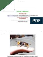 Avispón asiático gigante.pdf