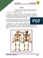 HUESO ARTIFICIAL LIOFILIZADO FINALL.pdf