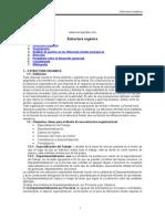 ESTRUCTURA ORGÁNICA.doc