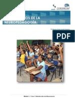 DND_M1C1_L_3_-_PRINCIPIOS_DE_LA_NEUROEDUCACION.pdf