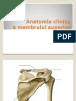 Membrul Superior Anatomie Clinica