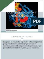 TRANSCRIPCIÓN Y PROCESAMIENTO.pptx