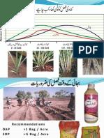 Sugarcane Fertilizers Recomendations