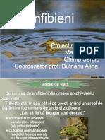 amfibieni.pptx