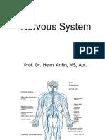 Nervous System 2010