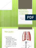pulmones-corazon.pptx.ppt