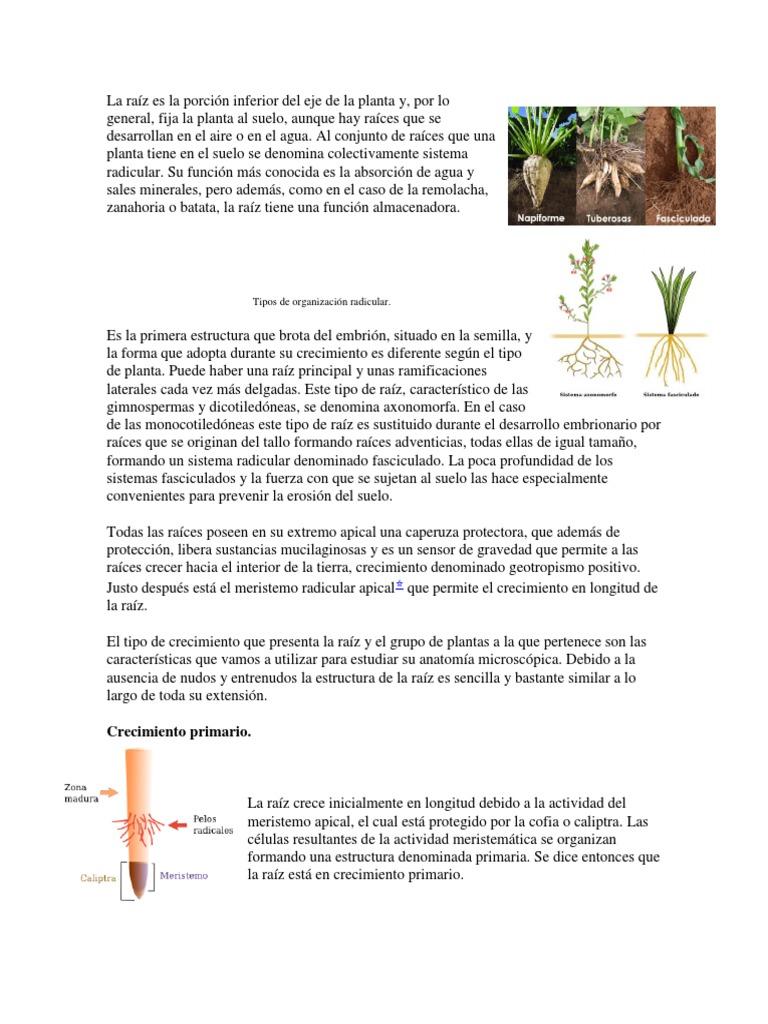 Fantástico Anatomía Eje Del Pelo Ornamento - Imágenes de Anatomía ...
