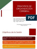 3-  Principios de Organización Cerebral.pptx
