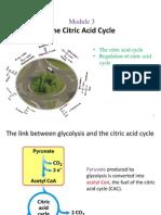 3 - Citric Acid Cycle(2)