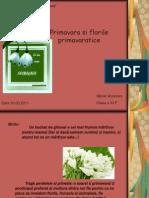 56219241 Ppt Flori de Primavara