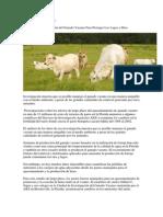 ÁREAS POR ANIMAL.docx