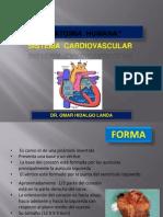 anatomia parte 1.pptx