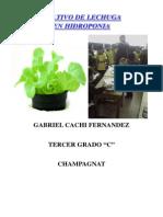 CULTIVO DE LECHUGA EN.pdf