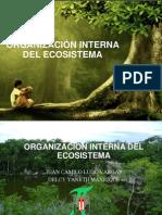 ORGANIZACIÓN INTERNA DEL ECOSISTEMA camilo.pptx