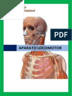 ACTIVIDADES-SISTEMA-LOCOMOTOR.docx