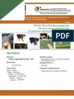 Barrenador del tronco y ramas del aguacate_2012(1).pdf
