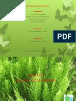 arvenses-111019131707-phpapp01.ppt