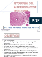 33-histologia-del-sistema-reproductor-masculino.ppt
