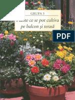 102342432 Gradinarit in Orice Anotimp 3 Plante Ce Se Pot Cultiva Pe Balcon Si Terasa