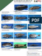 Ikan Air Tawar Yang Terancam Di Aceh_poster