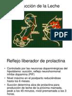 Produccion de la Leche Como func 2.ppt