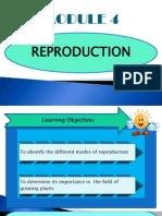 module 4 reproduction