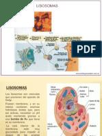 LISOSOMAS - RIBOSOMAS.pptx