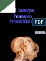 Cuerpo-Humano.pps