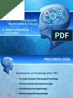 2. Bases biológicas de la conducta.pdf