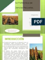 alimentacion presentacion.pptx
