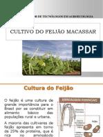 Cultivo_Feijão.ppt