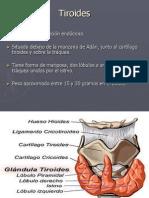 tiroides.ppt