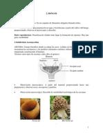 Práctica 2 (hongos y líquenes) de Botánica.pdf