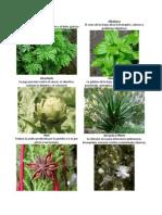 Album Plantas Medicinales.docx