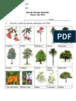 plantas autoctonas.docx