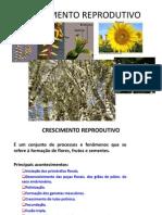 CRESCIMENTO+REPRODUTIVO.ppt