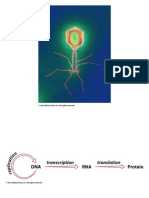 DEOXIRIBNONUCLEICO PRESENTACION PPT.ppt