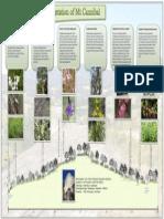 vegetation poster