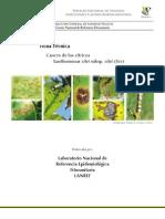 CancrodeloscitricosXanthomonascitrisubpcitri(Xcc).pdf