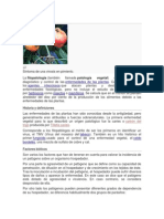 Fitopatología microbiologia.docx