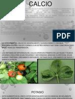 calcio potasio y carbono.pptx