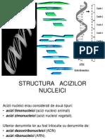 1+2. Acizii nucleici si Functiile acizilor nucleici