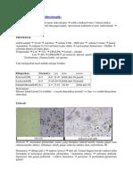 Urinalisis.docx
