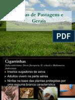 Pragas de Pastagens 2012.pdf