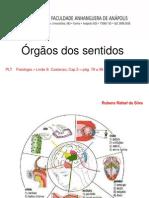 5 sistema-sensorial-visao-audicao-paladar (1).ppt