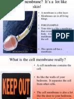cell membrane 2