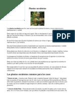 Plantas suculentas.doc