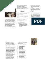 NATULALISMO.doc