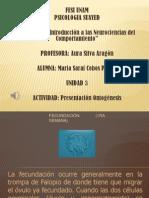 PresentaciónOntogenesis_CobosPalma.pptx
