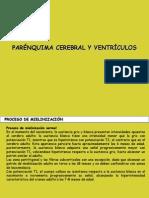 parenquima_y_ventriculos.pdf
